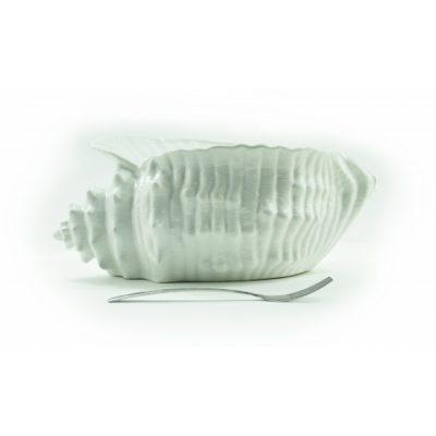 conchiglia-mediterranea-grande-bianca-1
