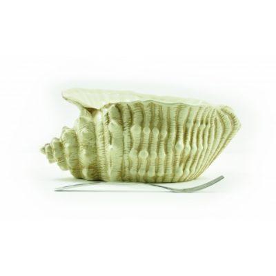 conchiglia-mediterranea-media-oro-vecchio-1